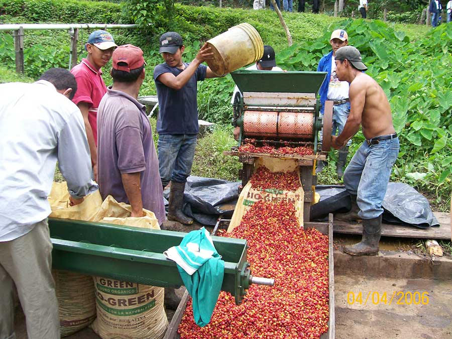 Coffee farmers in Nicaragua preparing coffee berries using a pulping machine.